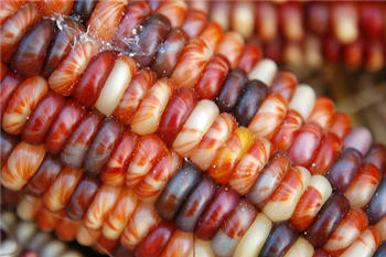 kernels-of-corn-flickr.jpg