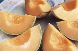 selecting ripe cantaloupe melon