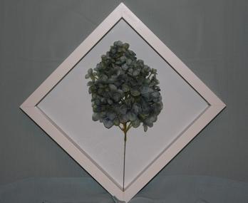 flower in a frame